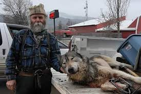 wolf and execution continues in the northern rockies