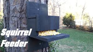 How To Hunt Squirrels In Your Backyard by Homemade Squirrel Feeder Youtube