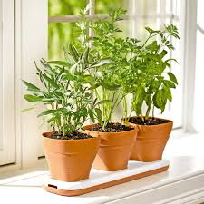 Window Sill Garden Inspiration Windowsill Herb Garden Pots Adjust To Three Heights The Green
