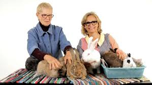 how to take care of a pet rabbit howcast the best how to