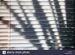 silhouette of plants outside the window creating abstract shadows