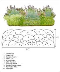 ornamental grasses border 1 white