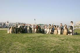 afghan hound mandarin spine afghan hounds
