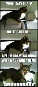 Crazy Cat Meme - car crazy cat memes quickmeme