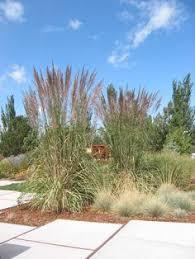 ornamental grasses provide winter interest and wildlife habitat in