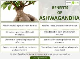 benefits of native plants 15 surprising benefits of ashwagandha or indian ginseng organic