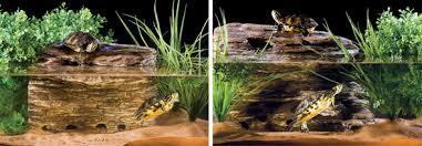 exo terra turtle cliff medium josh u0027s frogs