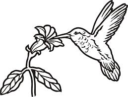 hummingbird outline clipart