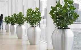 plantes bureau plantes de bureau un investissment