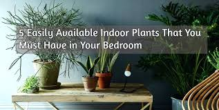 best bedroom plants bedroom with plants common house plants for your bedroom plants in