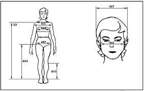 sketches of a woman u0027s body front view and a woman u0027s head front
