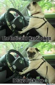 Dog Driving Meme - rmx what s up never seen a pug driver by craigh2150 meme center