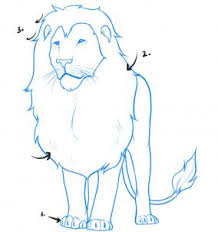 how to draw a lion step by step safari animals animals free