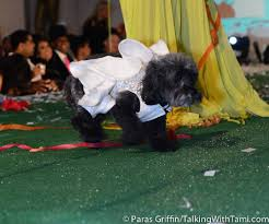 affenpinscher for sale near me bravo u0027s married to medicine star launches doggie couture line in
