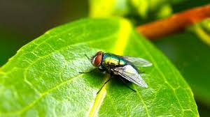 How To Get Rid Of Flies In The Backyard by The Ultimate Guide On How To Get Rid Of Flies