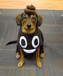 Weiner Dog Halloween Costumes 50 Genius Costume Ideas Puppy Squad