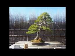 the best most expensive bonsai tree in the world the best