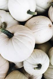 white pumpkins happy because fall i never knew how happy white pumpkins could