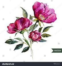 vintage bouquet watercolor floral vintage bouquet roses isolated stock vector