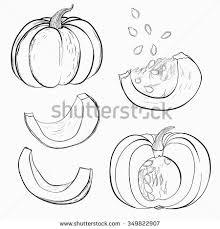 pumpkin black and white pumpkin vector hand drawn illustration pumpkin black stock vector