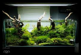 Aquascape Fish Iwagumi Hashtag On Twitter