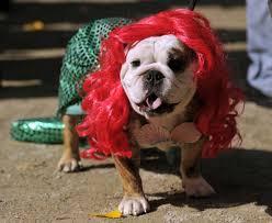 Dog Halloween Costumes 79 Pet Halloween Costumes Images Pet Costumes