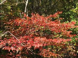 a variety of autumn colors at falls lake news from rockcliff farm