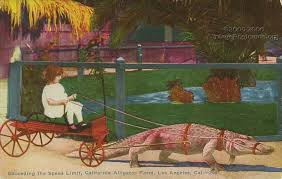 vintagepostcards org dating antique postcards