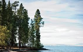 Montana best travel books images The hidden charms of montana 39 s flathead lake travel leisure jpg