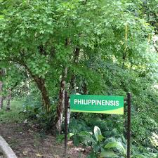Up Los Banos Botanical Garden by Weekend Guide 30 Hours In Laguna Cheap Travel For Women