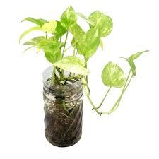 best indoor house plants indoor house plant best indoor house plants download indoor house