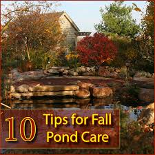 Aquascape Maintenance 10 Tips For Fall Pond Care Aquascape Inc
