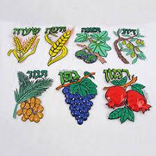 sukkah decorations seven species plastic sukkah decorations source the