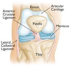 Knee Anatomy Pics Knee Arthroscopy Orthoinfo Aaos