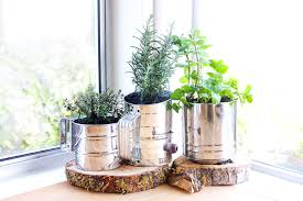 window herb gardens indoor herbs garden ideas pre tend be curious