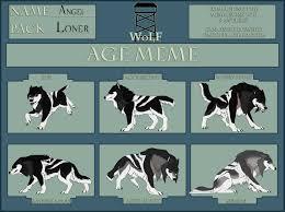 Meme Wolf - wolf age meme angel by cxcr on deviantart