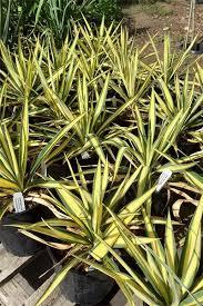Nursery Plant Supplies by Grasslands Nursery U0026 Garden Supplies Summerland