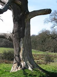 termitetreatment com are your trees hiding termites morel tips
