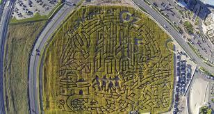 cornbellys wizard of oz corn maze