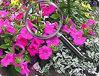 hidden alphabet flower garden mindjolt games