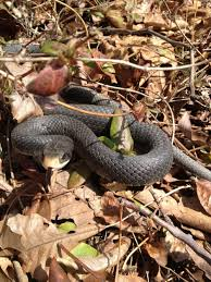 snake images photo gallery with pictures of snakes