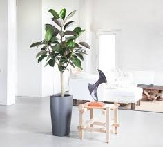 Decorate Your House by Living Room With Tall House Plant Decorate Your House With Tall