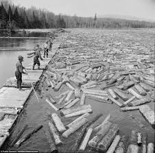 Woodsman Supply Huge Logging Operation Supplied Us Military During Ww2 Daily