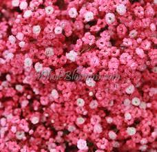 Baby S Breath Flower Buy Bulk White Filler Babys Breath Flower