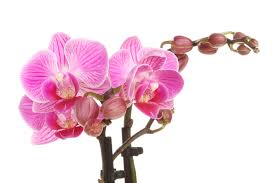 orchid pictures don t them because they re beautiful spectacular orchids are
