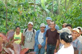 farm workers in nicaragua prepare for fair trade coffeegente