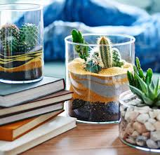 cactus home decor decorating our homes with plants interior design explained