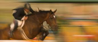 Kentucky how far can a horse travel in a day images Sallee horse vans horse transportation jpg