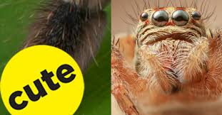 Misunderstood Spider Meme 16 Pics - if you haven t seen spider feet up close surprise they re adorable