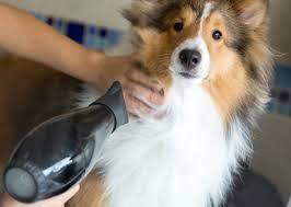 Make Bathtime Fun For Your Dog Are You Bathing Your Dog Wrong